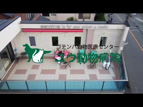 【採用動画】ユウ動物病院 就活プロジェクト 獣医師/動物看護師