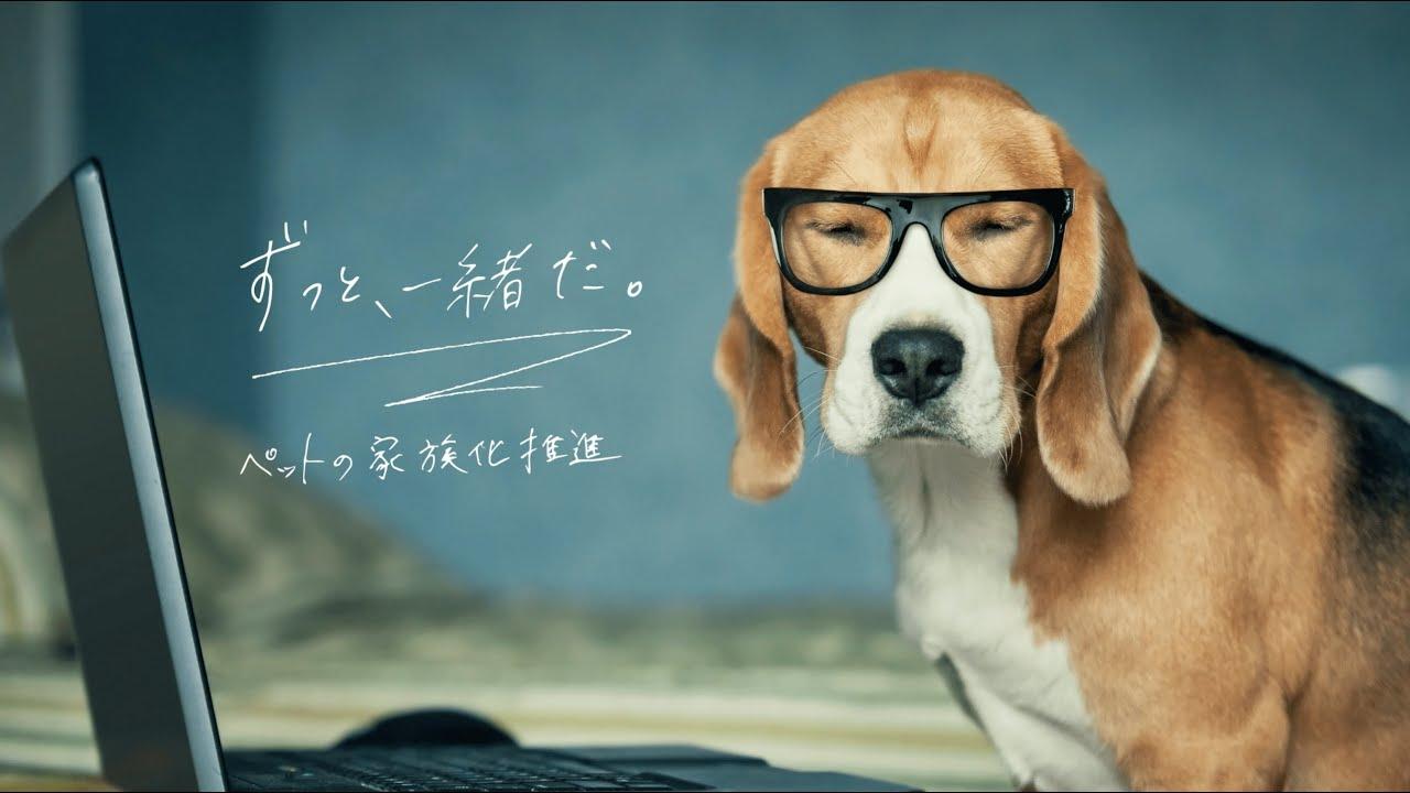 株式会社TYL 採用PITCH動画