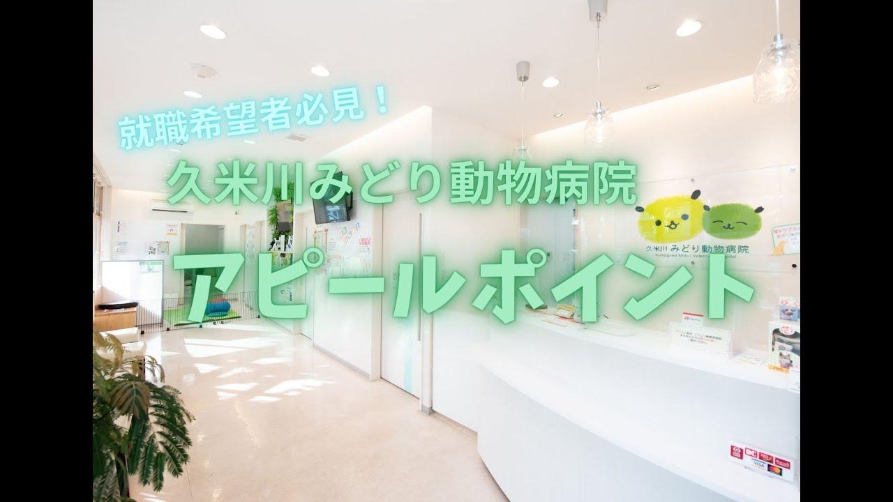 【就職希望者必見!】 久米川みどり動物病院 採用動画